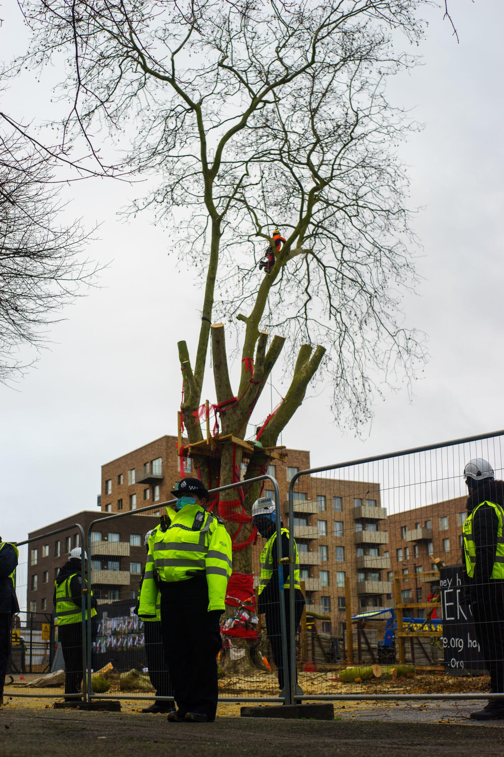 happy man tree hackney